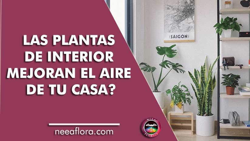 ¿Las plantas de interior mejoran el aire de tu casa? - Blog Neea Flora