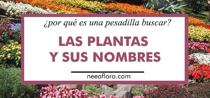 Por que es una pesadilla buscar las plantas y sus nombres Neea Flora
