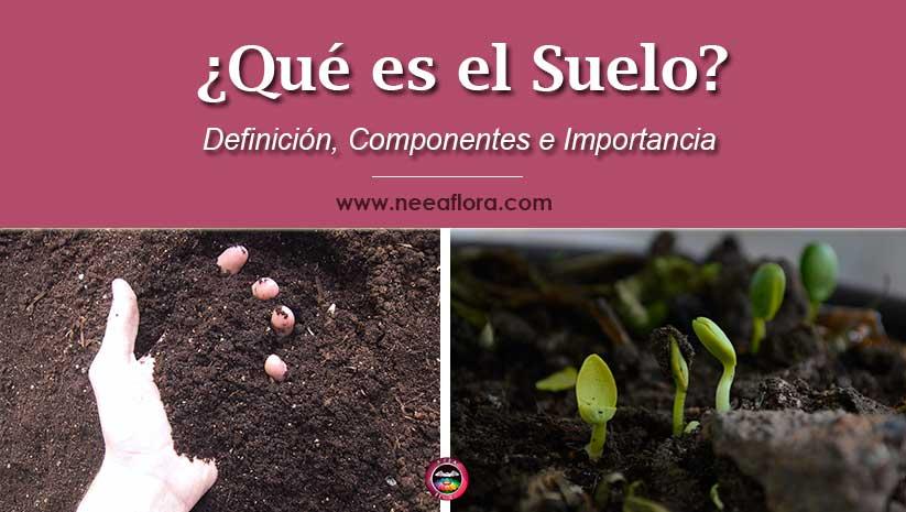 Sabes ¿qué es el suelo? ¿Cuales son los componentes del suelo? ¿cual es su importancia? Hoy hablamos de ellos, seguro los verás con otros ojos ¡Empecemos!