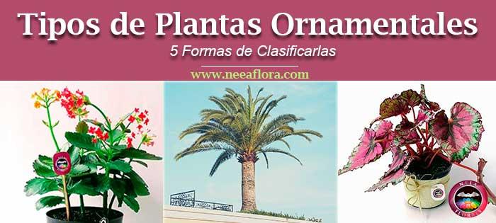 Tipos de plantas ornamentales 5 formas de clasificarlas descubre qué son y cuales son las plantas ornamentales Neea Flora vivero Bogotá a domicilio