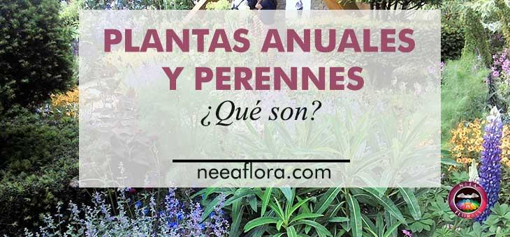 ¿Qué son las plantas anuales y perennes?