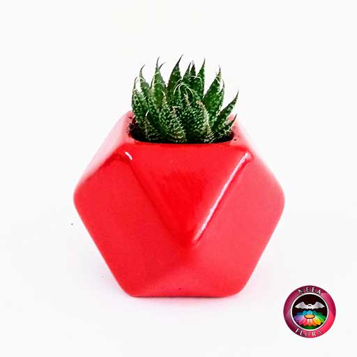 Recordatorio suculenta matera cerámica resinada estrella mediana roja Neea Flora