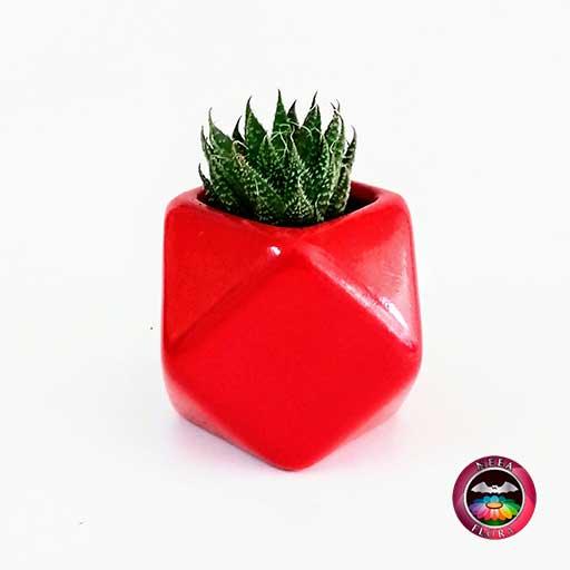 Suculenta recordatorio matera cerámica estrella 7x7cm roja con tarjeta Neea Flora
