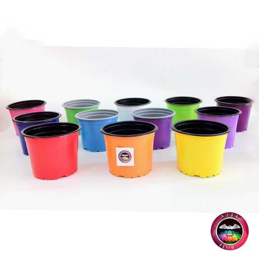 Materas plásticas 9cm colores frontal Neea Flora