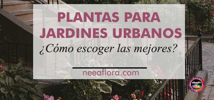 Las mejores plantas para jardines urbanos - Blog Neea Flora