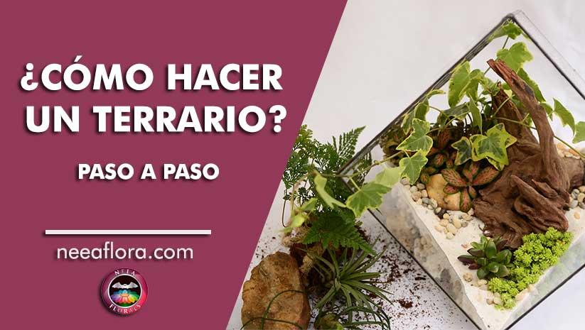 Cómo hacer un terrario paso a paso Neea Flora vivero plantas Bogotá