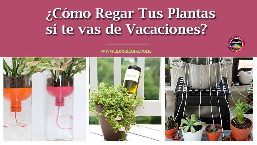 ¿Cómo regar tus plantas si te vas de vacaciones? Neea Flora