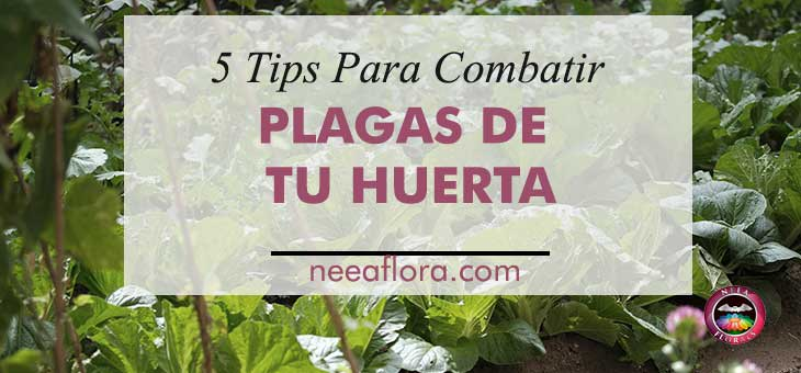 5 tips para combatir plagas de tu huerta - Neea Flora
