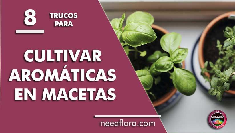 8 trucos para cultivar plantas aromáticas en macetas - Blog Neea Flora