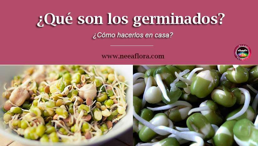 ¿Qué son los germinados?, beneficios para la salud, origen y ¿Cómo hacerlos en casa? - Blog Neea Flora
