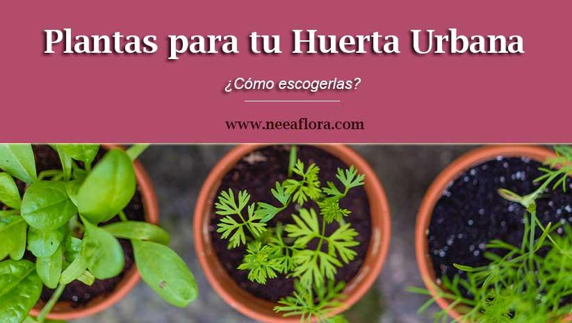 ¿Cómo escoger plantas para tu huerta urbana? Blog Neea Flora