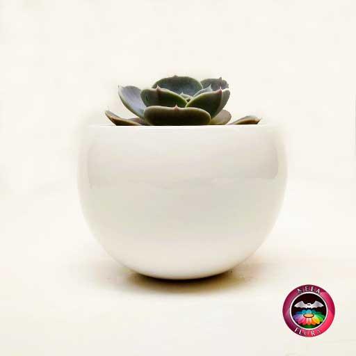 Suculenta maceta cerámica esfera grande