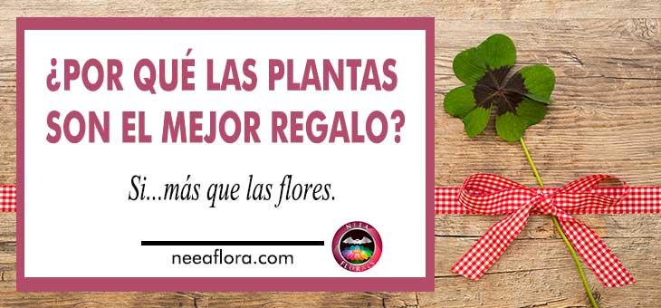 Por qué las plantas son el mejor regalo Si más que las flores Neea Flora