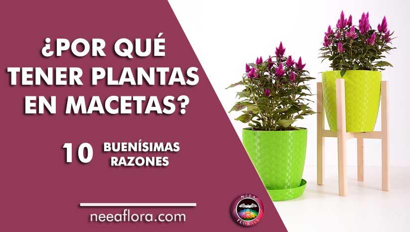 post por qué tener plantas en macetas 10 buenísimas razones Neea Flora