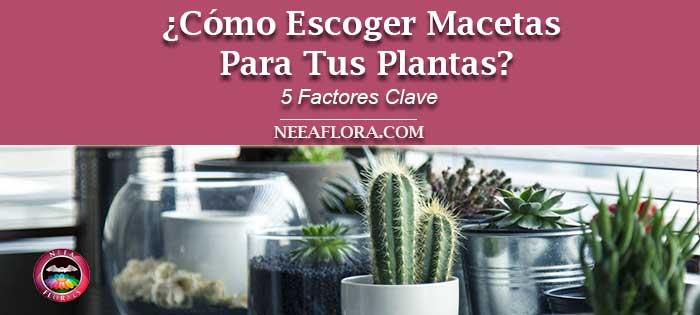Post cómo elegir macetas para tus plantas 5 factores clave. Neea Flora