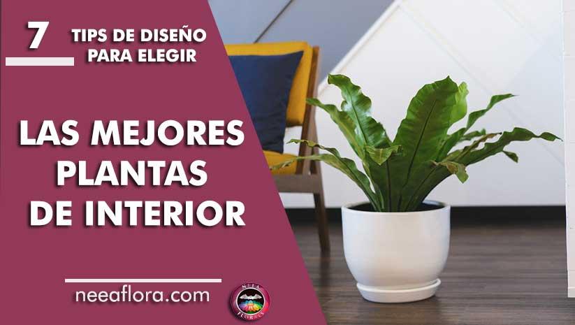 7 tips de diseño para elegir las mejores plantas de interior Neea Flora