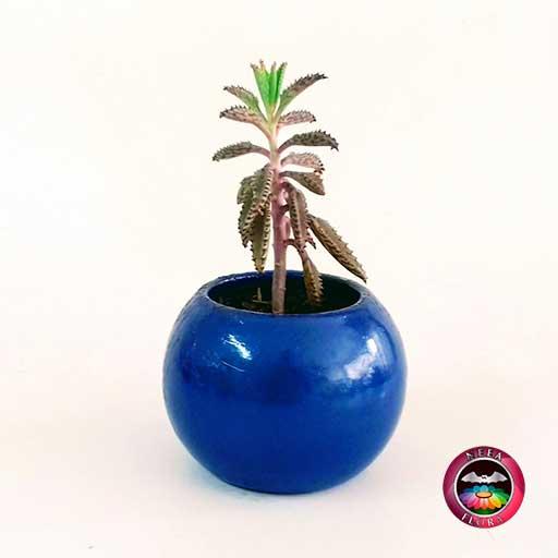 Suculenta recordatorio matera cerámica bolita 5-7-10cm bola mediana azul Neea Flora