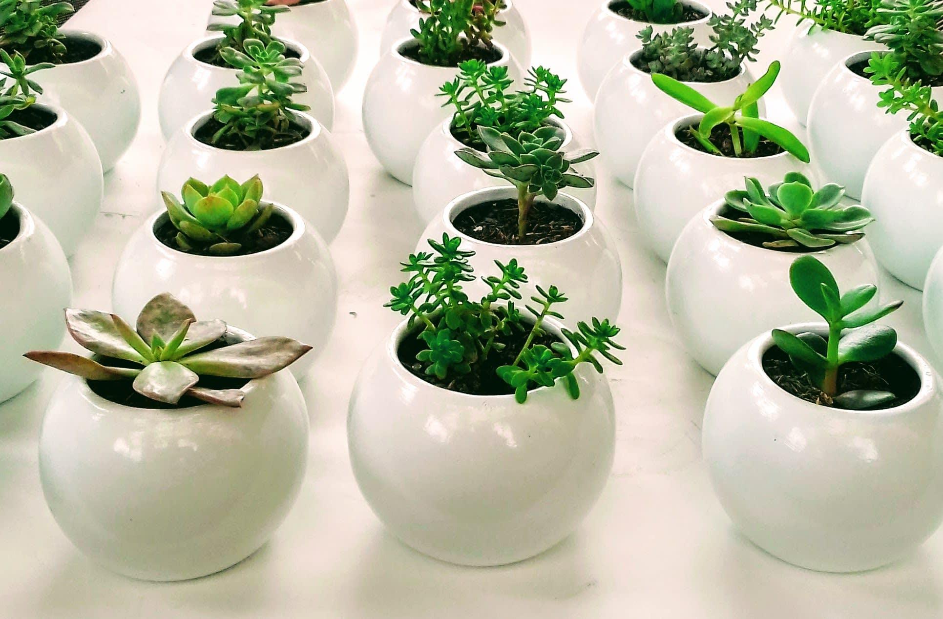 Suculentas materas cerámica resinadas recordatorios Bogotá. Recordatorios Neea Flora