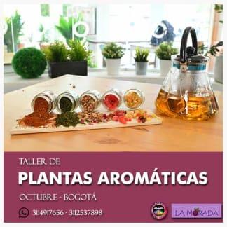 Taller de plantas aromáticas en Bogotá Octubre 2019