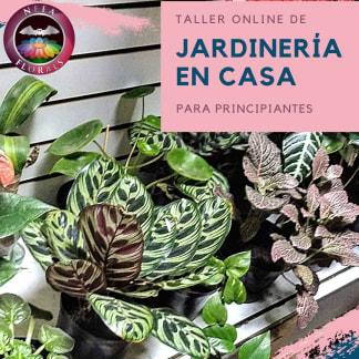 TALLER VIRTUAL DE JARDINERÍA EN CASA PARA PRINCIPIANTES - Neea Flora