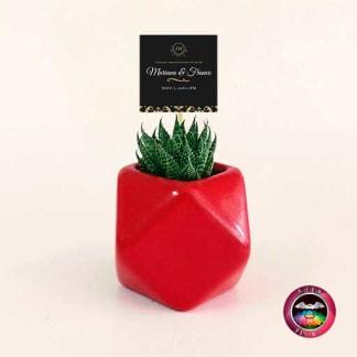 Suculentas recordatorios matera cerámica estrella 7x7cm roja con tarjeta Neea Flora