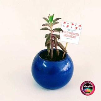 Suculentas recordatorios materas cerámica bolitas 5-7-10cm bola mediana azul con tarjeta Neea Flora