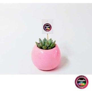 Recordatorio suculenta matera cerámica resinada bola mini rosa Neea Flora