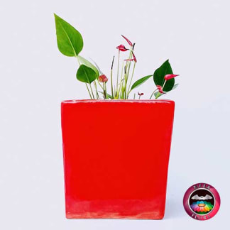 Anturio mini rojo Anthurium andreanum 10cm matera cerámica cubo Eliza roja lateral