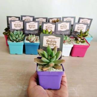 Regalos para eventos empresariales plantas suculentas maceta plástica 5cm cuadradas Neea Flora