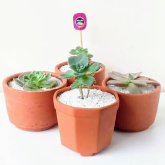 Regalos empresariales Bogotá plantas suculentas materas barro Neea Flora