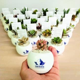 Recordatorio empresarial suculentas cerámica logotipo esfera 5x5cm Neea Flora