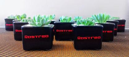 Suculentas materas cerámica personalizadas con sticker