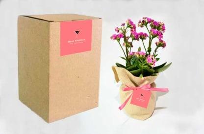 Planta con flor Kalanchoe bolsa yute personalizada
