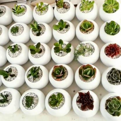 Regalos corporativos plantas suculentas cerámica pintada Neea Flora