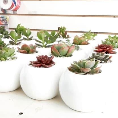 Souvenirs empresariales plantas suculentas ceramica pintadas Neea Flora