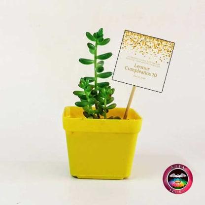 Suculentas recordatorios matera plástica 7cm colores amarilla con tarjeta Neea Flora