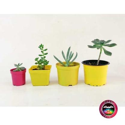 Suculentas recordatorios materas plásticas 5cm 7cm 8cm 9cm colores Neea Flora