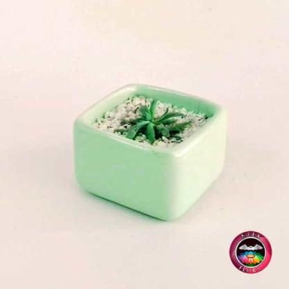 Recordatorio suculenta matera cerámica resinada pequeña caja baja verde crema Neea Flora
