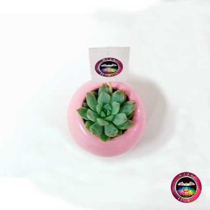 Suculenta matera cerámica resinada bola mini rosa superior Neea Flora