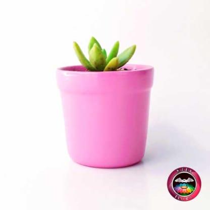 Suculentas matera cerámica vaso mini 6x5cm rosa lateral vivero Bogotá