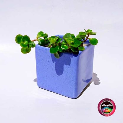 Suculenta maceta cerámica cuadrada azul frontal Neea Flora