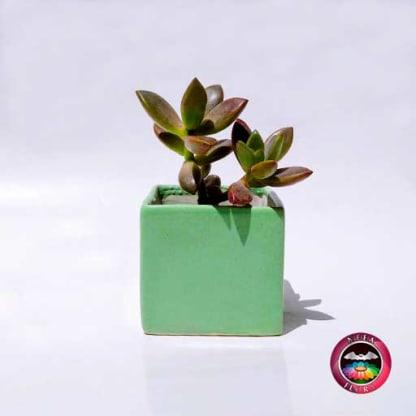 Suculenta maceta cuadrada verde cerámica esmaltada Neea Flora