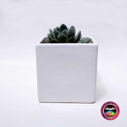 Suculenta matera cerámica cubo mediana frontal Neea Flora