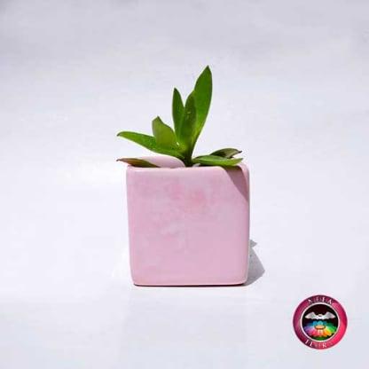 Suculenta maceta cerámica cubo rosa mediana frontal Neea Flora