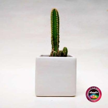 Cactus maceta cerámica mediana frontal Neea Flora