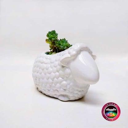 Suculenta matera cerámica animales oveja