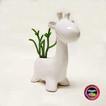 Suculenta matera cerámica animales jirafa redonda