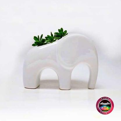 Suculenta matera cerámica animales elefante angulado 11x5x9cm