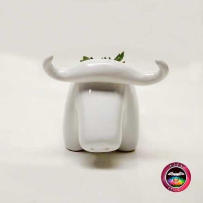 Suculenta matera cerámica animales toro frontal Neea Flora