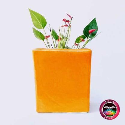 Anturio mini rojo Anthurium andreanum 10cm matera cerámica cubo Eliza naranja lateral